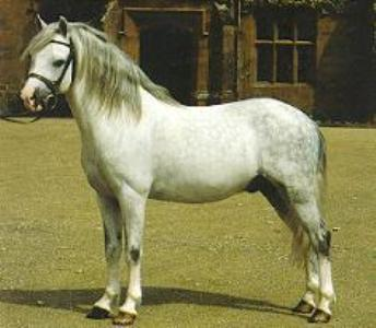 History  Pony of the Americas  Official Breed Site