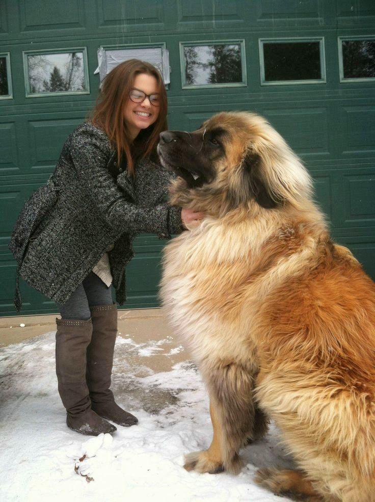 This Breed Of Dog Might Be Massive, But You'll Want One When You See These Pics