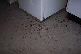 Cockroaches around refrigerator