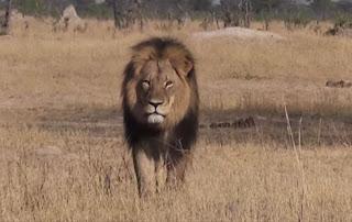 http://freshsnews.blogspot.com/2015/07/30-lion-zibaboue-.html