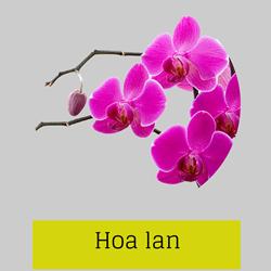 https://sites.google.com/site/hinhanhtqcc/hoa-lan