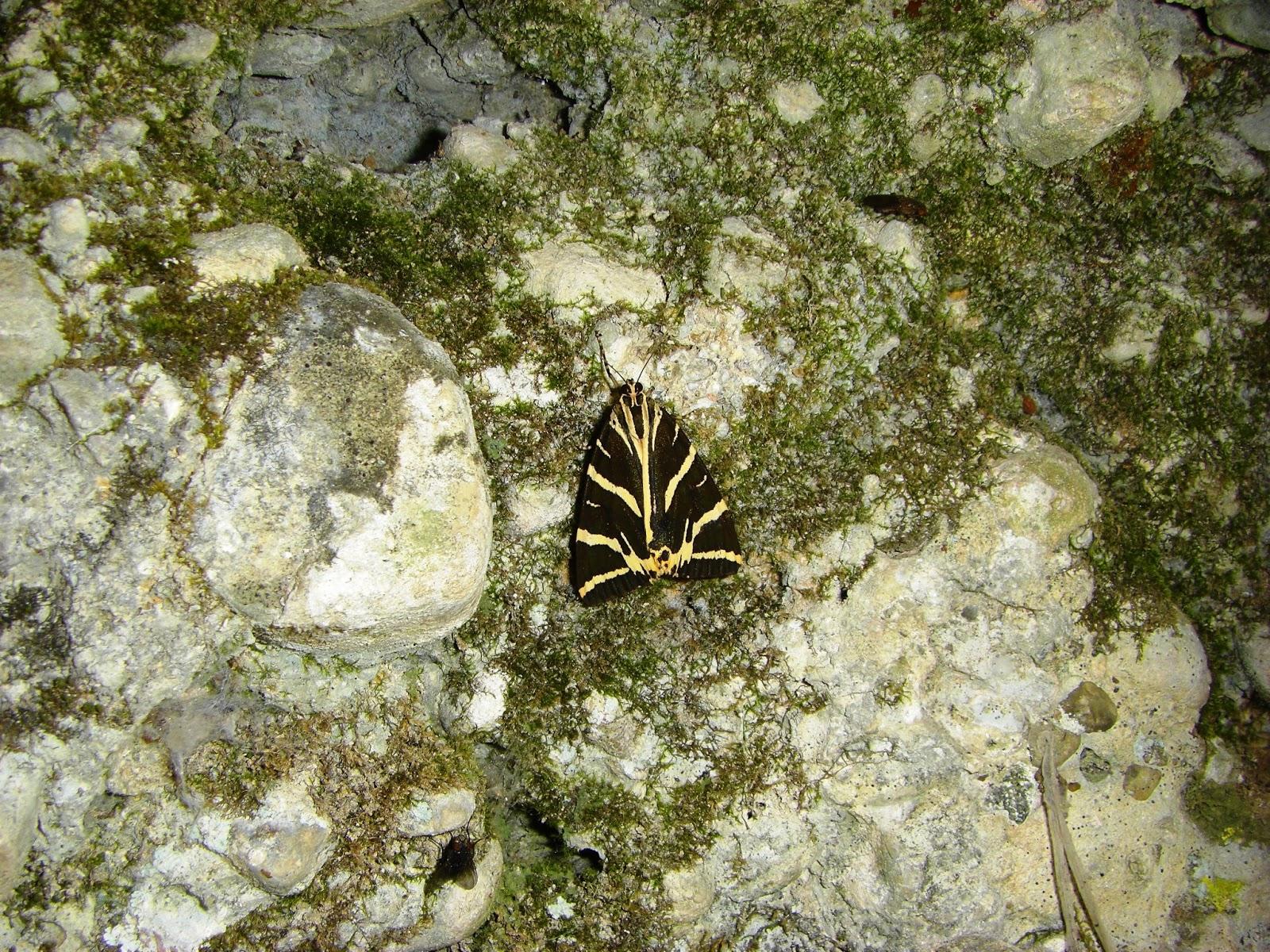 Petaloudes Valley (Valley of the Butterflies)  Villa Nefeli