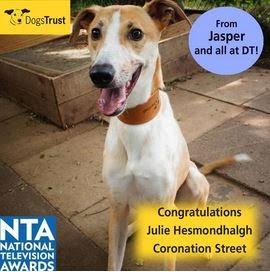 http://www.dogstrust.org.uk/rehoming/dog/1082973/jasper#.Ut_4iLTFIr0