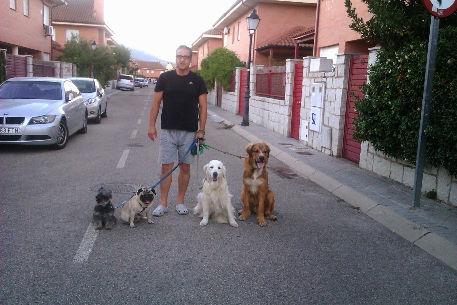 paseando los perros