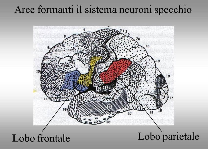 Amore Psiche Gabry G Rizzolatti Neuroni Specchio Amor