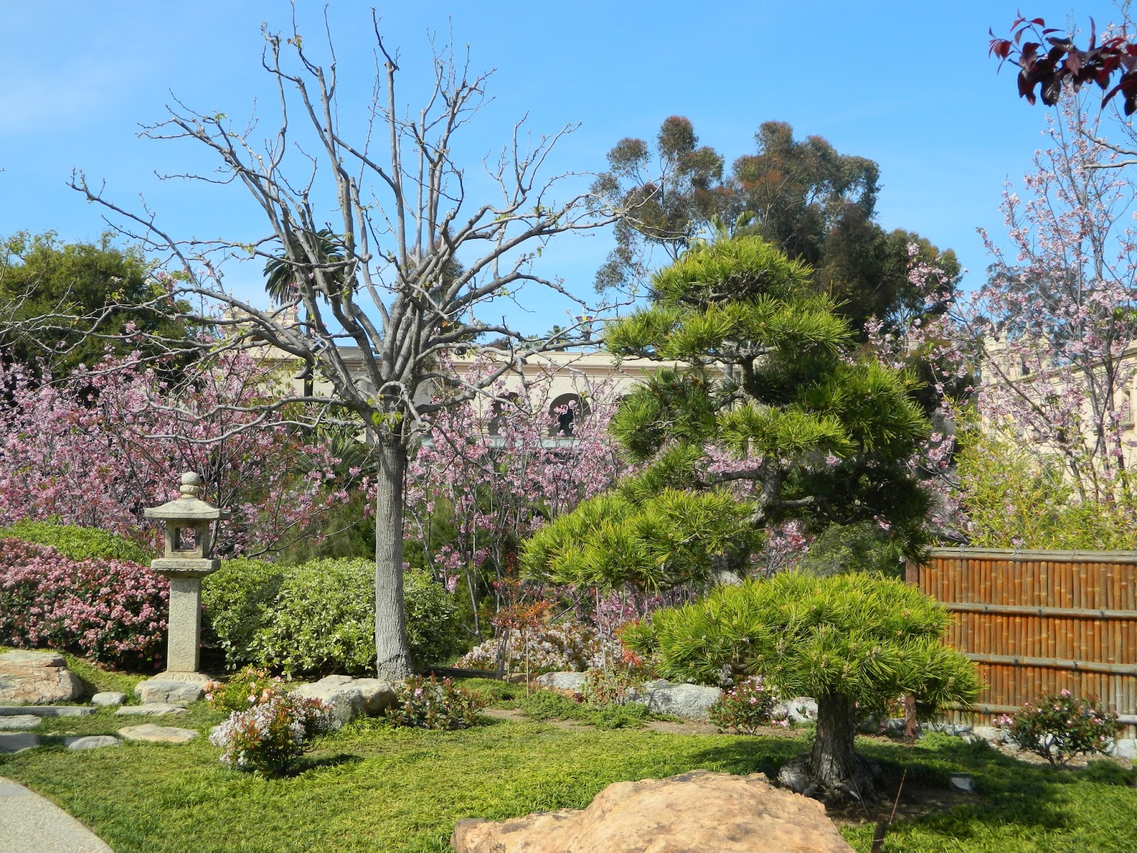 Gardenenvy Japanese Friendship Garden In San Diego Is Blooming And Growing