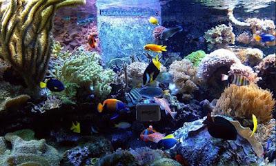 Tips Cara Merawat Ikan Hias Air Laut