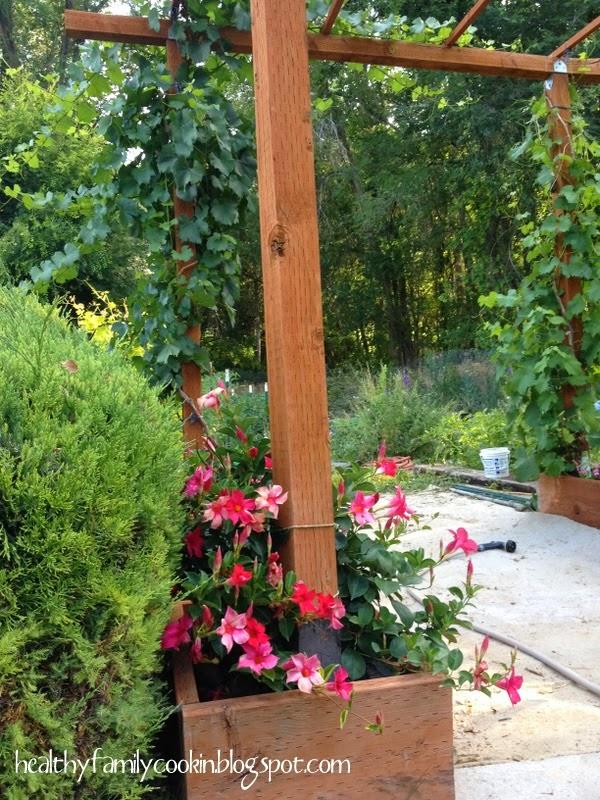 Tour Our Garden