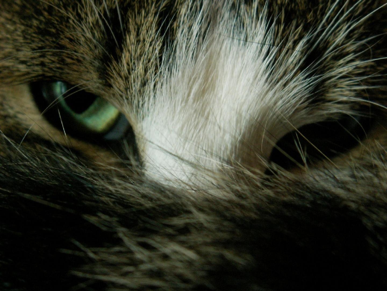 Wallpapers de gatos en HD parte 1