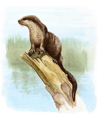 mustelidos prehistoricos Paludolutra