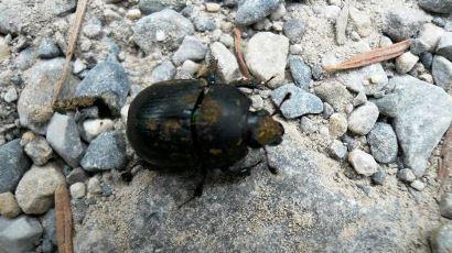 Estudio de Fauna - Invertebrados