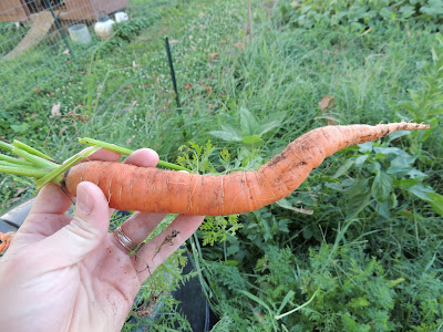 Crooked Carrot