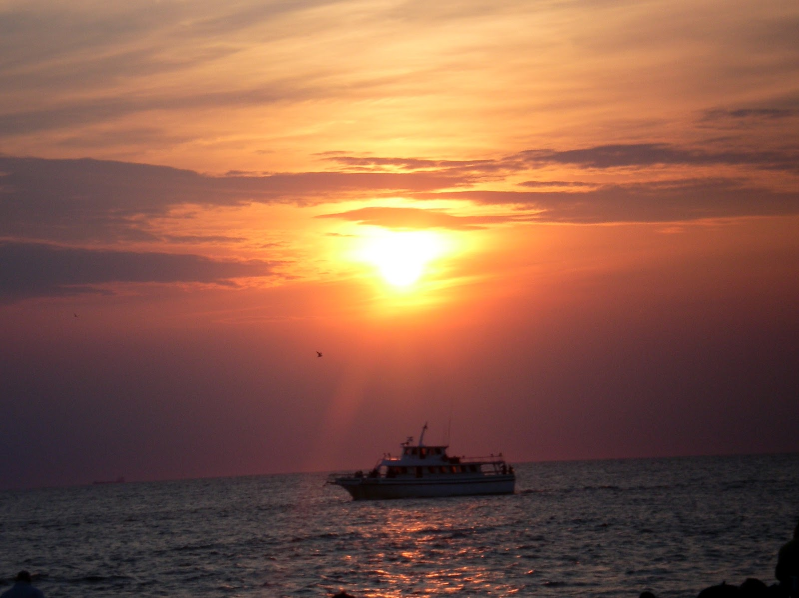 Cape may fishing charter boat for Cape may fishing charters