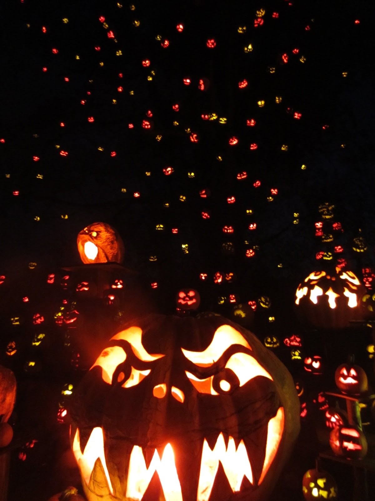 evan and lauren's cool blog: 10/14/12: roger williams zoo jack-o