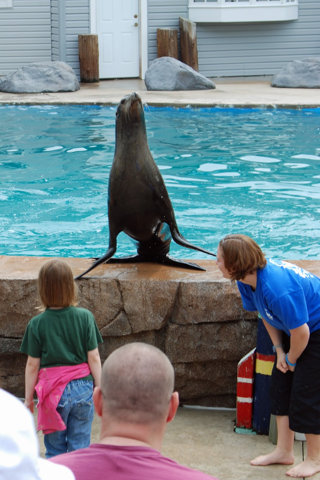 how to become a sea lion trainer