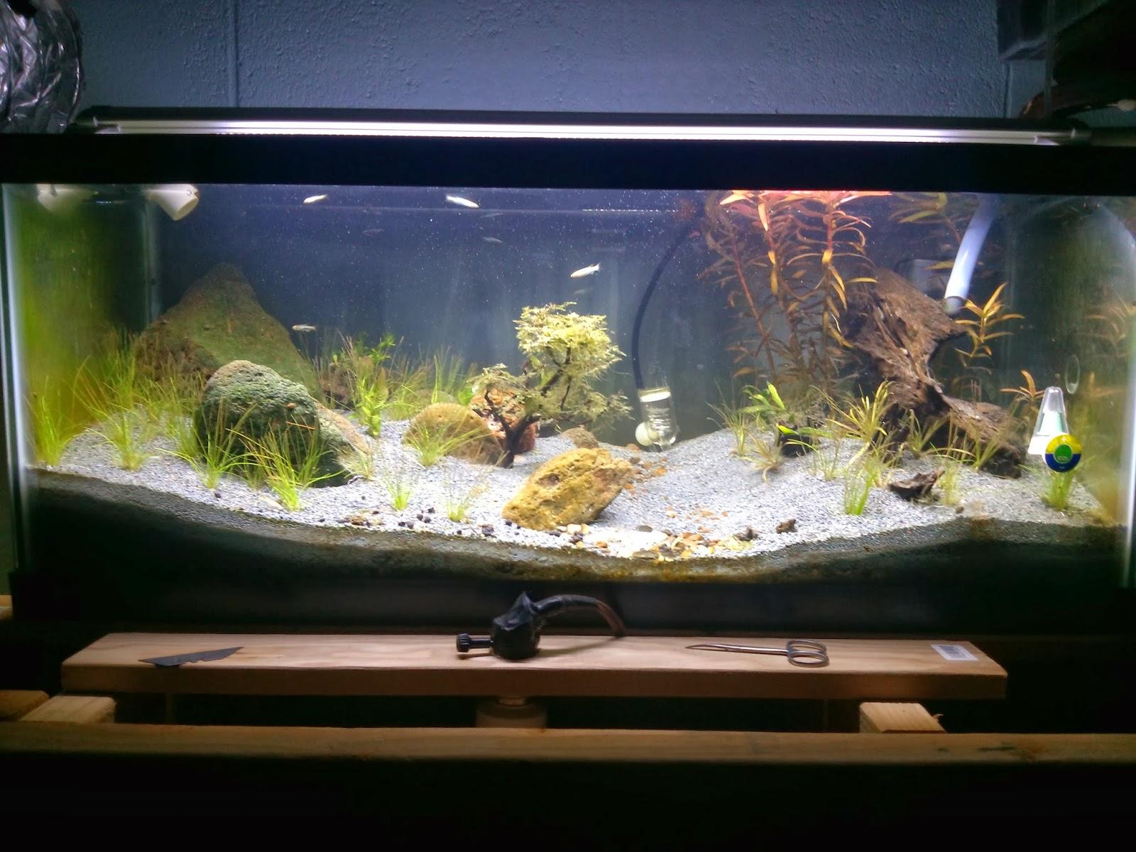 Aquarium journal 20 gallon long asian sp update for 30 gallon long fish tank