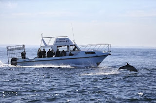 dolphins false bay