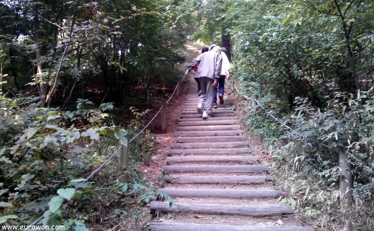 Escaleras de madera en un bosque coreano