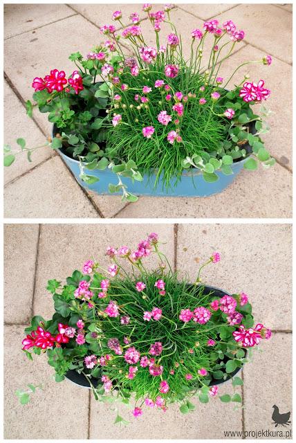 kwiaty dla leniwych