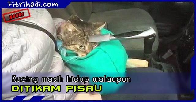 (Ngeri) Kucing Masih Hidup Walaupun Ditikam Di Kepala 3