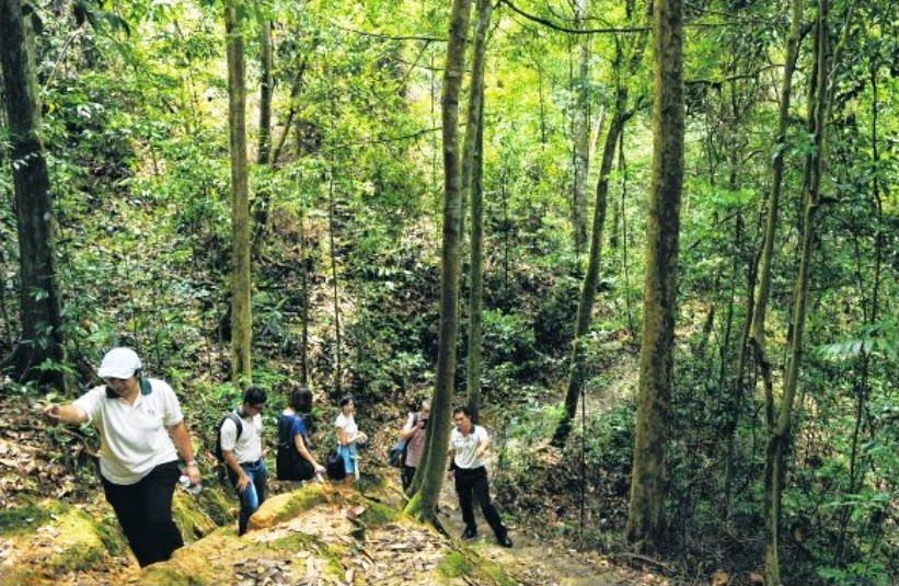 WORKS SOON: An eroded section of a trail in Bukit Timah Nature Reserve which will be restored.