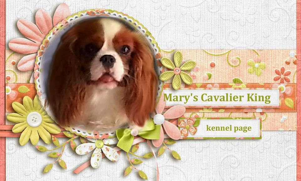 Mary's Cavalier King - Kennel Page
