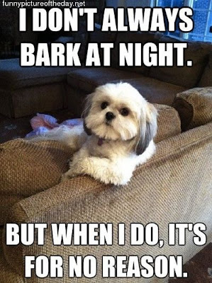 Scumbag Dog Barking At Night No Reason