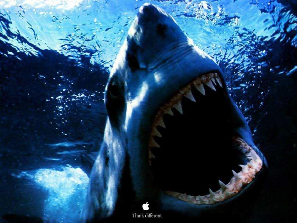 http://1.bp.blogspot.com/-FV2kEuAuxg0/TfrCGRY3L8I/AAAAAAAABQk/yPUFHlyo5V0/s1600/Shark_004.jpg