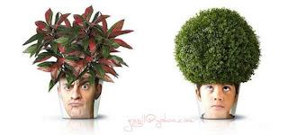 Creative Plant Pots :: 5g@F