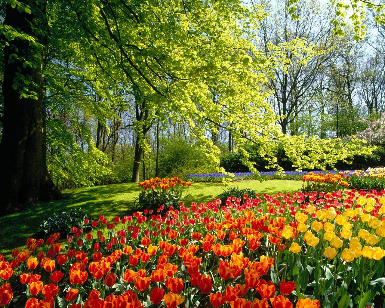 spring nature wallpaper - photo #16