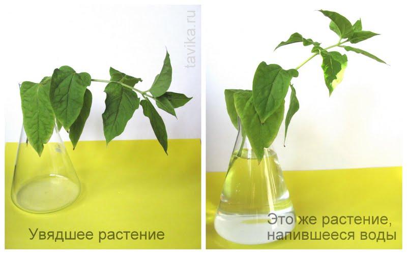 опыты с растениями