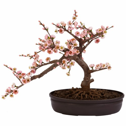 https://www.landngarden.com/Pink_Cherry_Blossom_Bonsai_p/nrn-001.htm