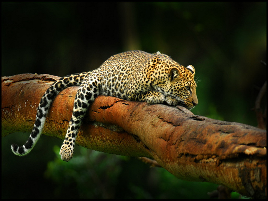 Encyclopaedia of Babies of Beautiful Wild Animals: Leopards amazing