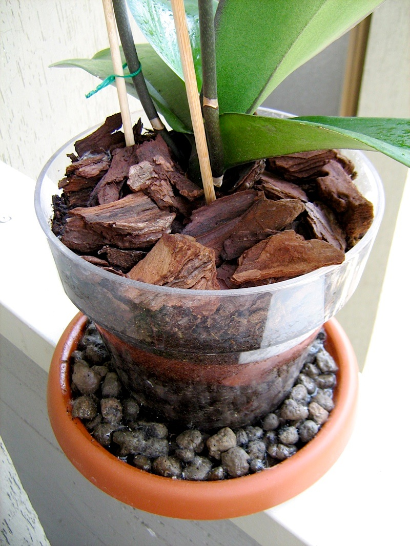 Chamerion blog di giardinaggio viaggi natura for Vaso orchidea
