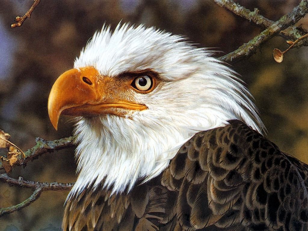 Carl Brenders Eagle