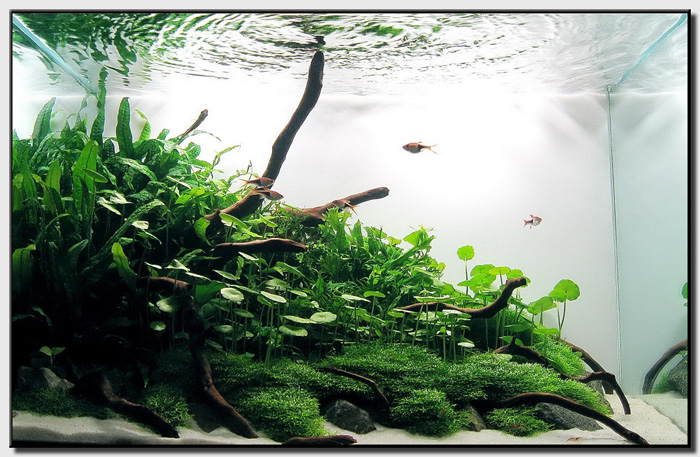 The Simplest Way To Create A Slope Aquascape Is To Just Take Some Gravel  (preferably Medium Grade As Sand Will Slowly Erode Flat With The Water  Currents And ...