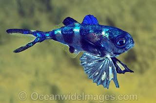 7 wonders of the world fish wonders of the world