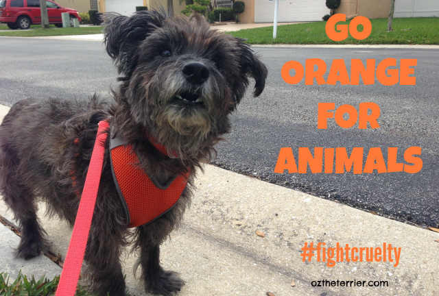 #fightcruelty Go Orange for Animals and support Prevention of Cruelty to Animals Month