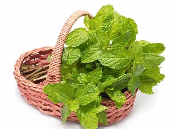 Những loại rau thơm chữa được bệnh