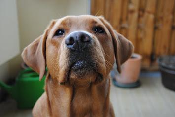Und hier geht es zum Blog vom Hundekind