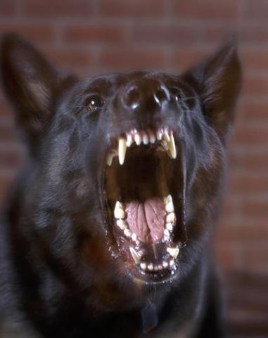 ¿Que hacer si un perro te quiere matar o ataca a otro?