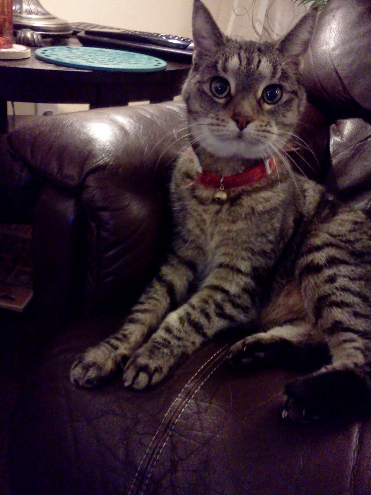 KC Kitty Cat