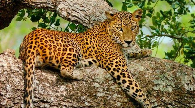 20 Hewan Paling Berbahaya Di Dunia