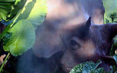 gambar binatang, wallpaper hewan, foto hewan lucu, fotografi hewan