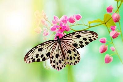 La mariposa de mi jardín - Insectos en las flores - Beautiful butterfly