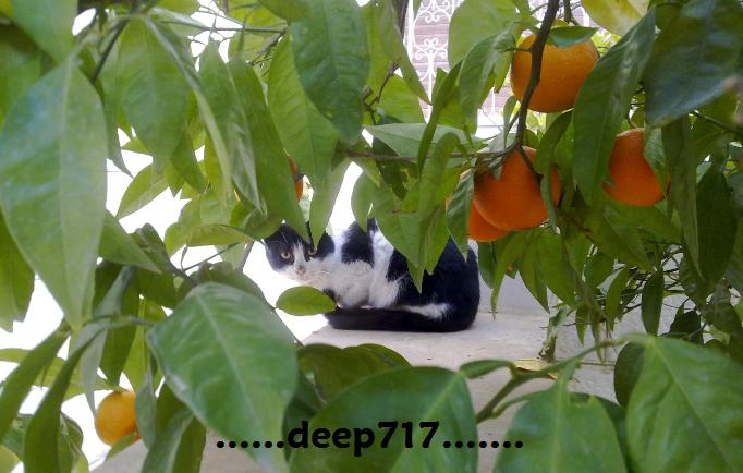 ...........................................deep717..........................................
