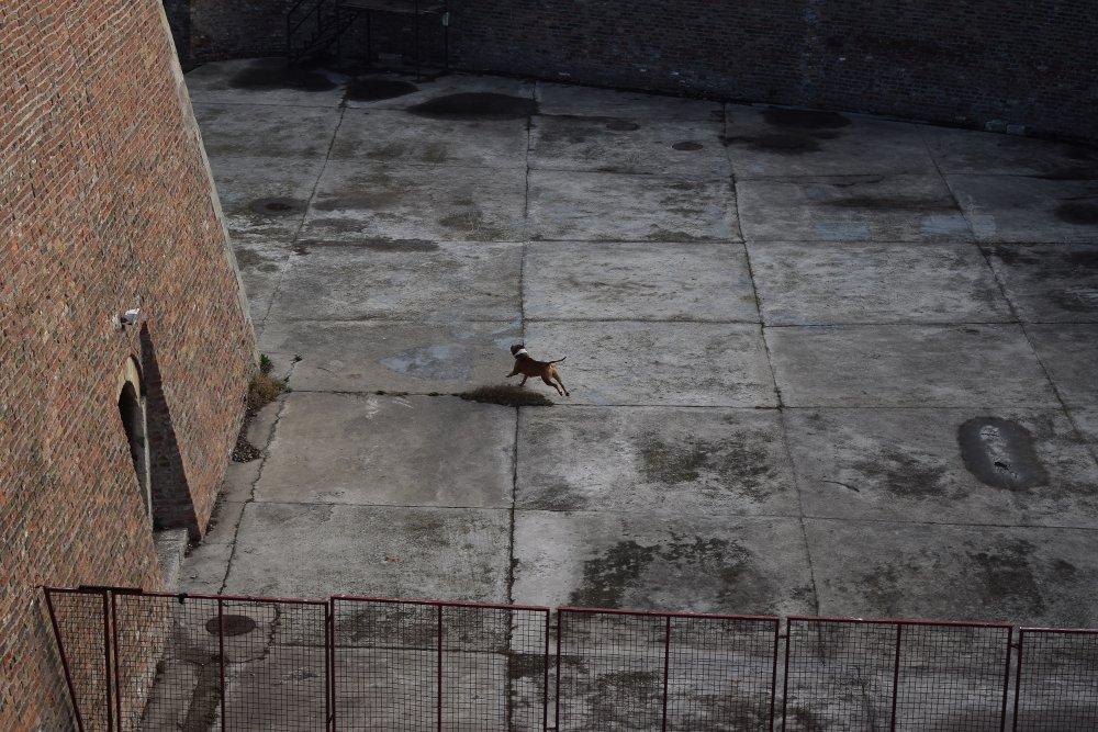 Pas trći za lopticom