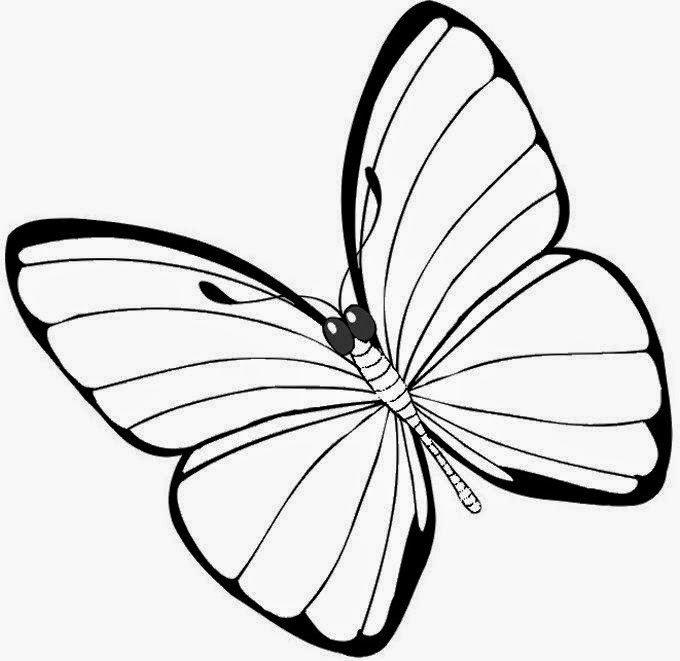 molde borboleta