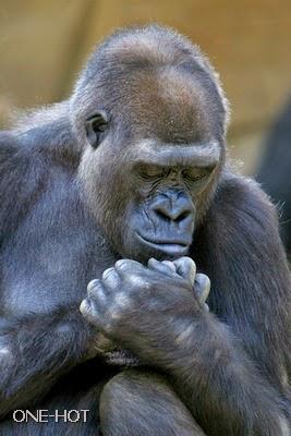Tuhan, besok anakku daftar ke perguruan tinggi, nilainya emang jelek, tapi kelakuannya jelek juga kok, tapi tenang saja, yang punya Kampus Monyet itu kawan dekatku main Poker.. amin