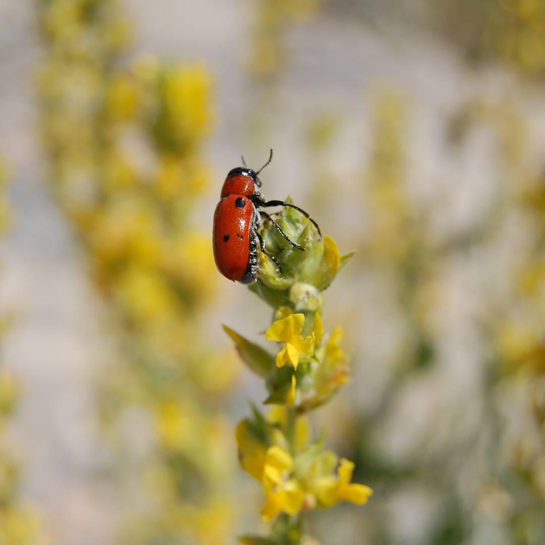 paisaje-naturaleza-insectos